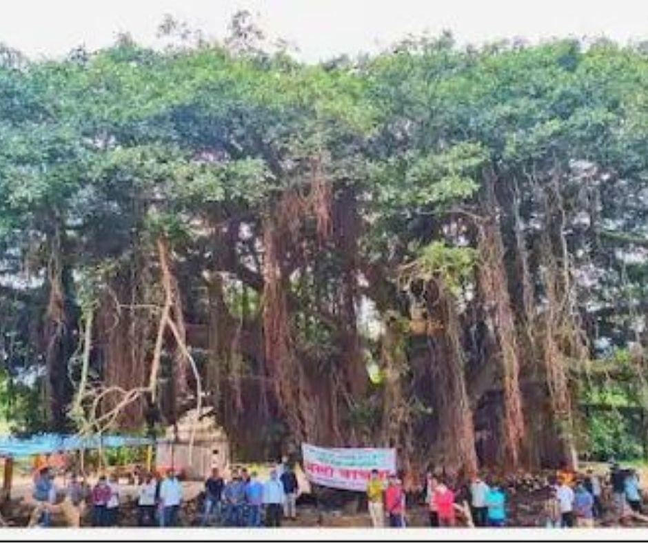400 ਸਾਲ ਪੁਰਾਣੇ ਦਰੱਖਤ ਨੂੰ ਬਚਾਉਣ ਲਈ ਨਿਤੀਨ ਗਡਕਰੀ ਨੇ ਬਦਲਿਆ ਹਾਈਵੇ ਦਾ ਨਕਸ਼ਾ